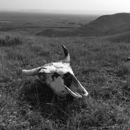 Grasslands skull, downsized black and white