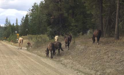 Hideaway wild horses reduced