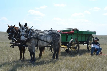 Mule!