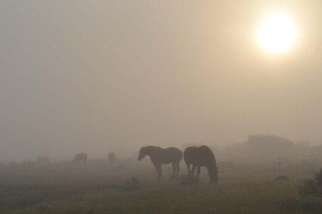 Jim's team in the morning mist.