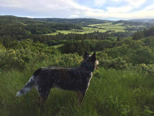 cypress - spy on hill